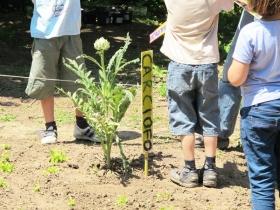 hortus-urbis-laboraotrio-per-bambini-foto-di-zappataromana