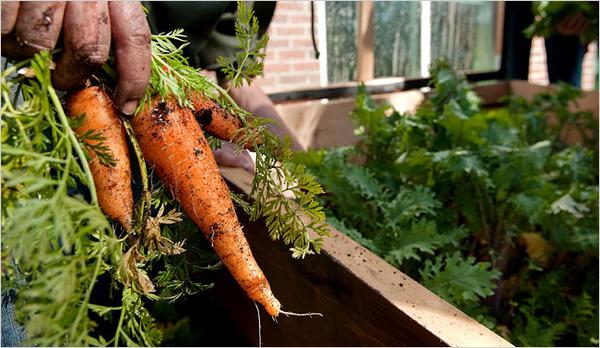 Seminiamo zucchine raccogliamo relazioni sociali comune info - Del huerto a casa ...