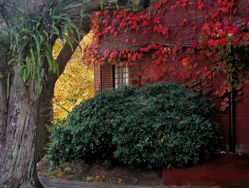 colori-autunno