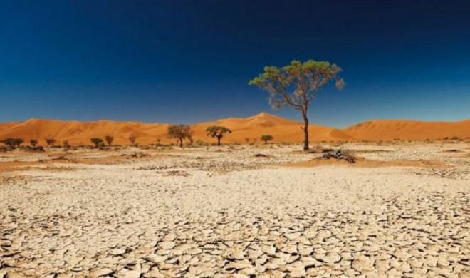 pp_agricoltura_sostenibile_cambiamento_climatico-660x390