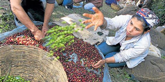 I semi sono dei contadini |Comune-info