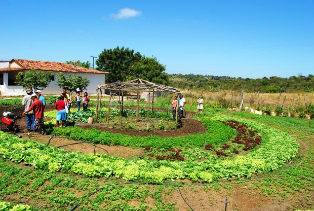 1426014026agroecologia_em_alagoa_seca_-_foto_-_valdivia_costa_2