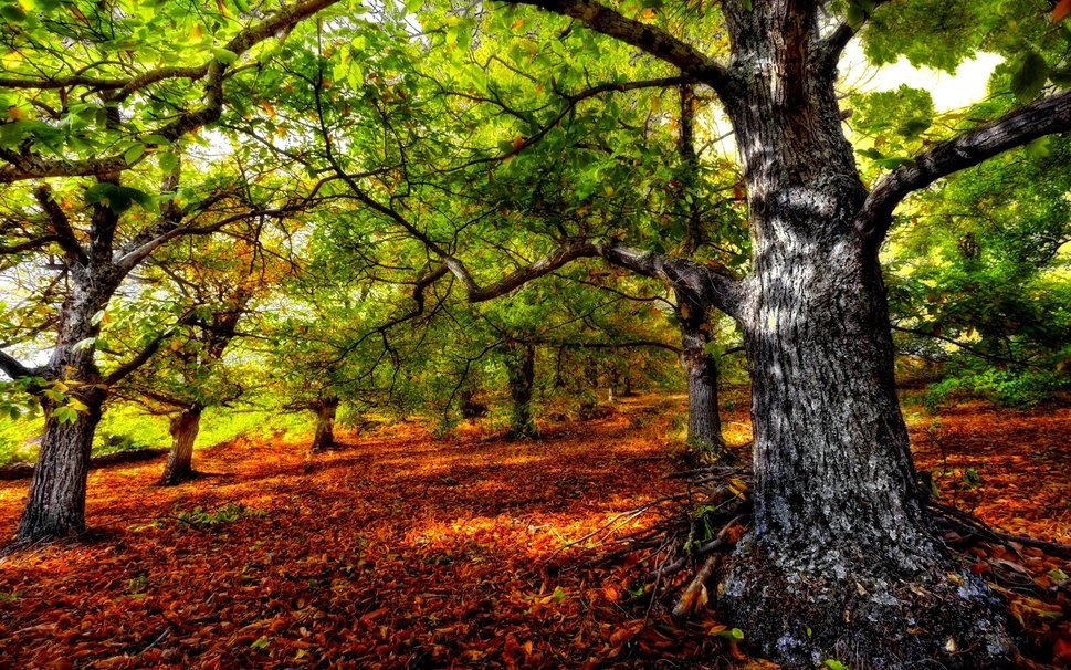 259236__beautiful-forest-hdr_p