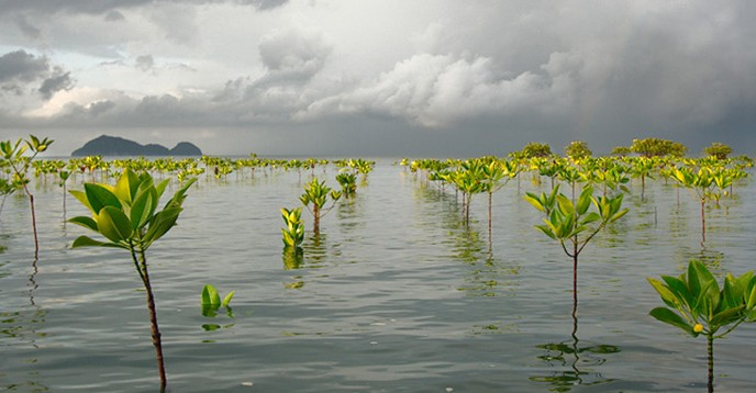 img_colin-and-sarah-northway_stormy_morning_mangroves_flickr_dpl