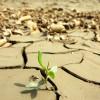 muchos-lugares-de-la-tierra-estan-sufriendo-por-el-calentamiento-globalexpand