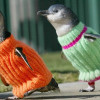 penguin-sweaters