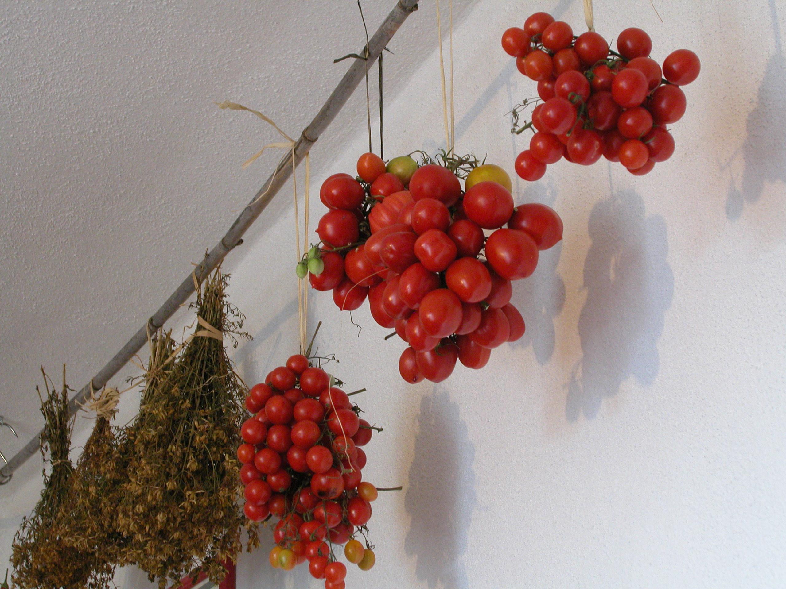 pomodori e iperico