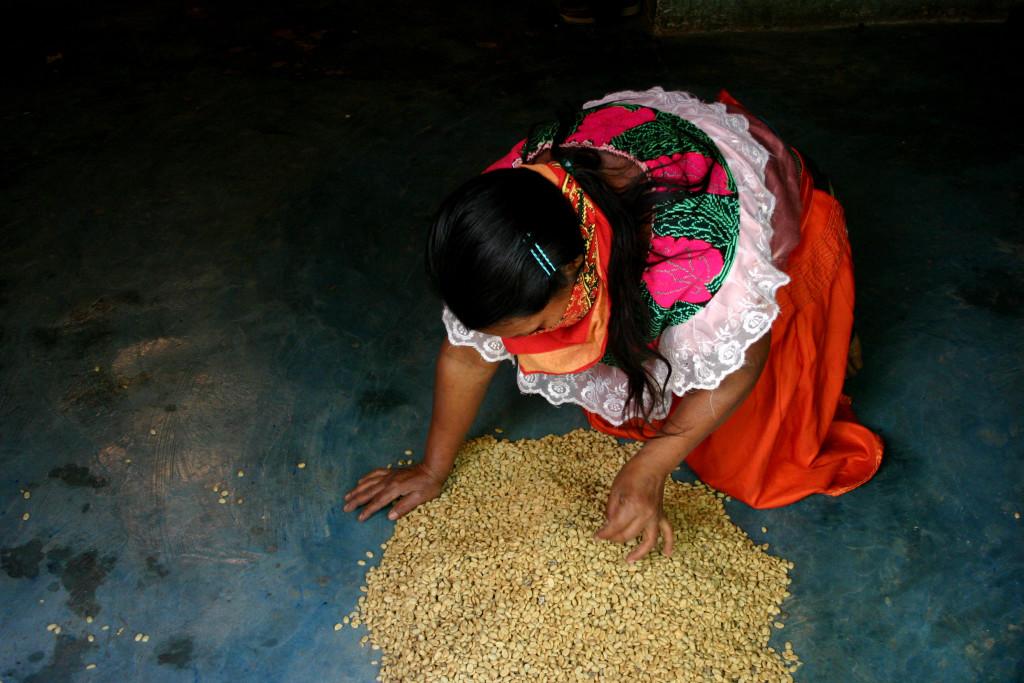 produttori della cooperativa Tatawelo - zona del Caracol di Morelia - Chiapas - dic.'05