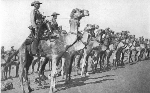 TruppeCammellateTedescheAfricaSudOvest1915