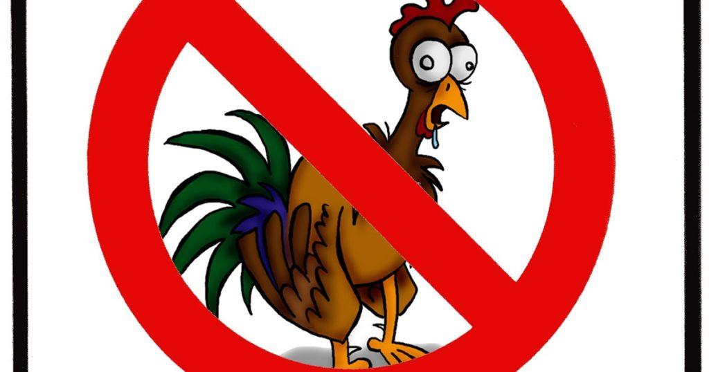 no_pollo