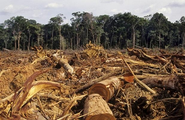 deforestazione4