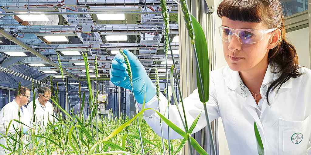 wheat-in-bayer-laboratoryr-1024x512
