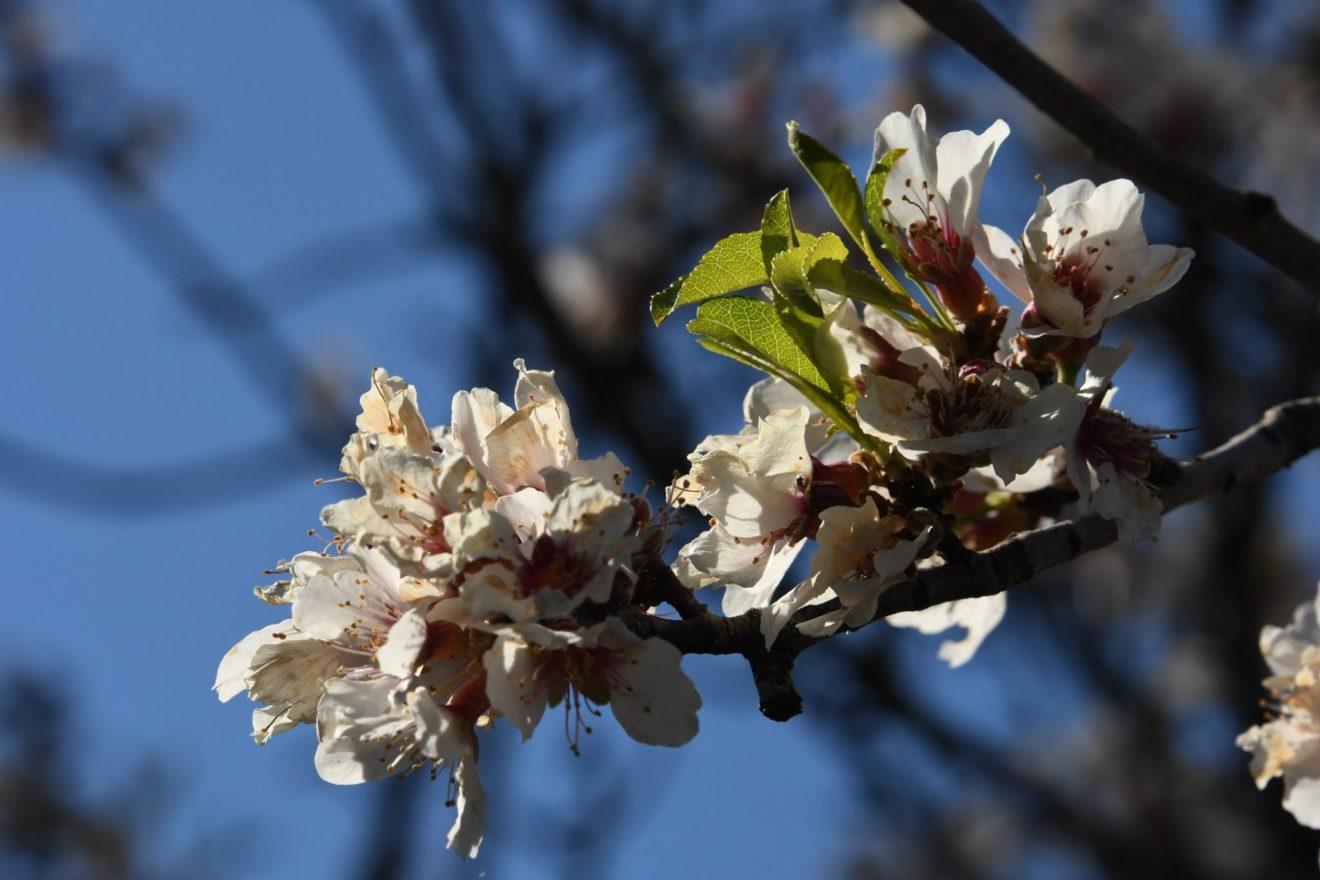 Una triste primavera