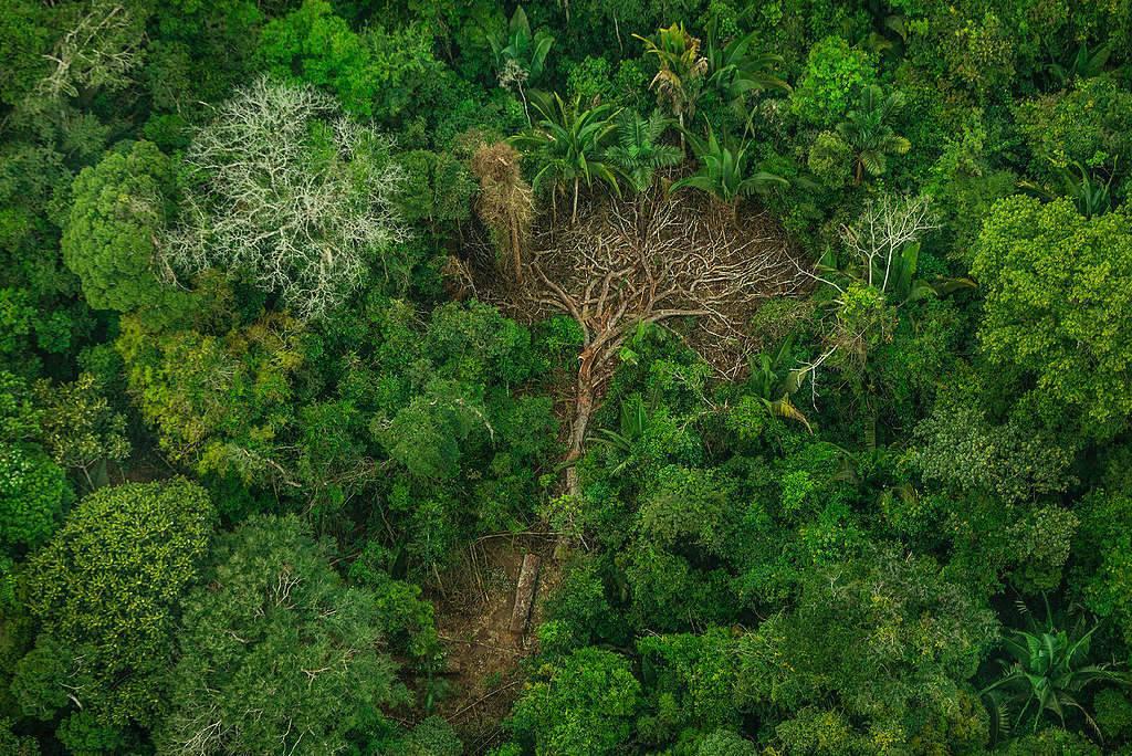 La nostra foresta grida