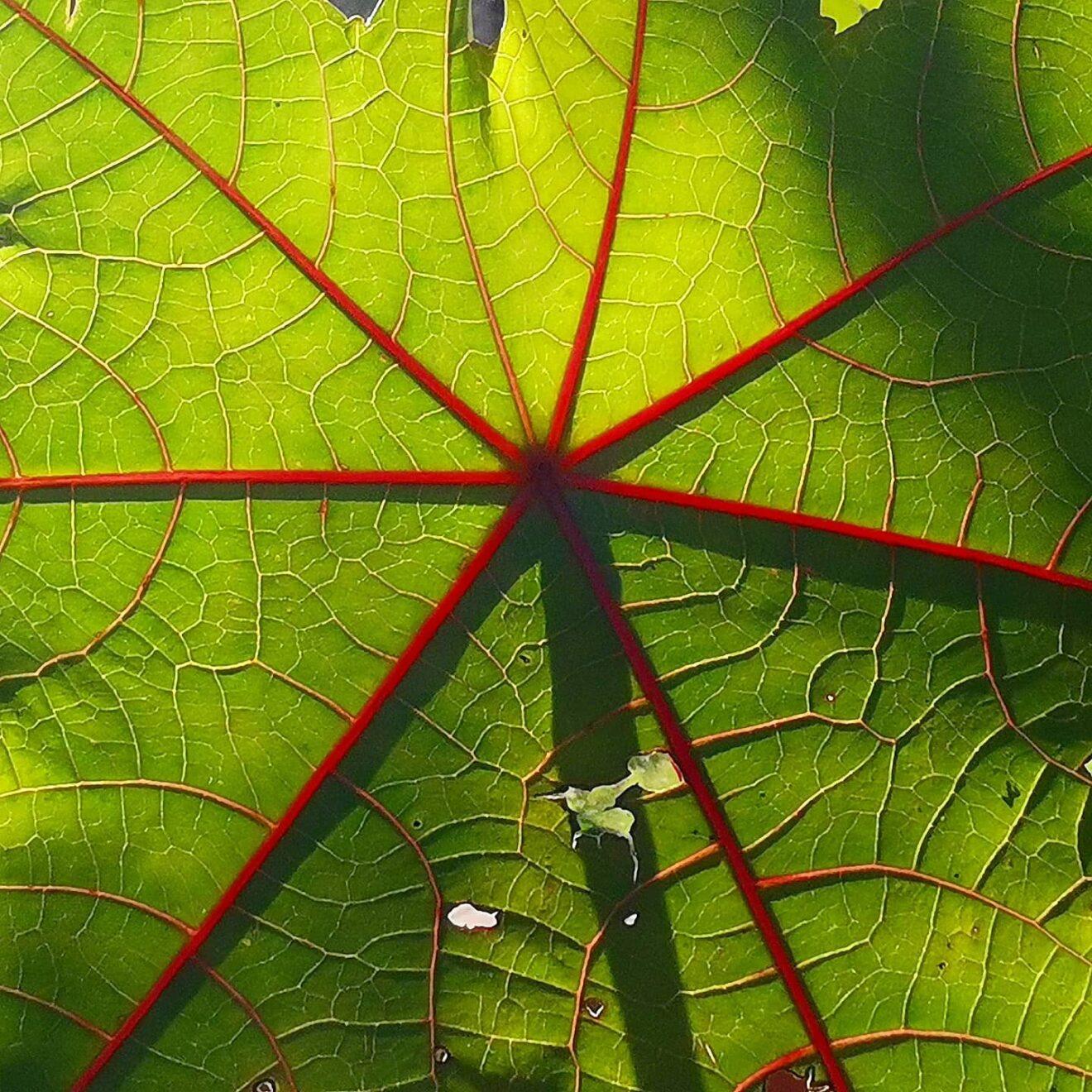 Il mercante della transizione ecologica