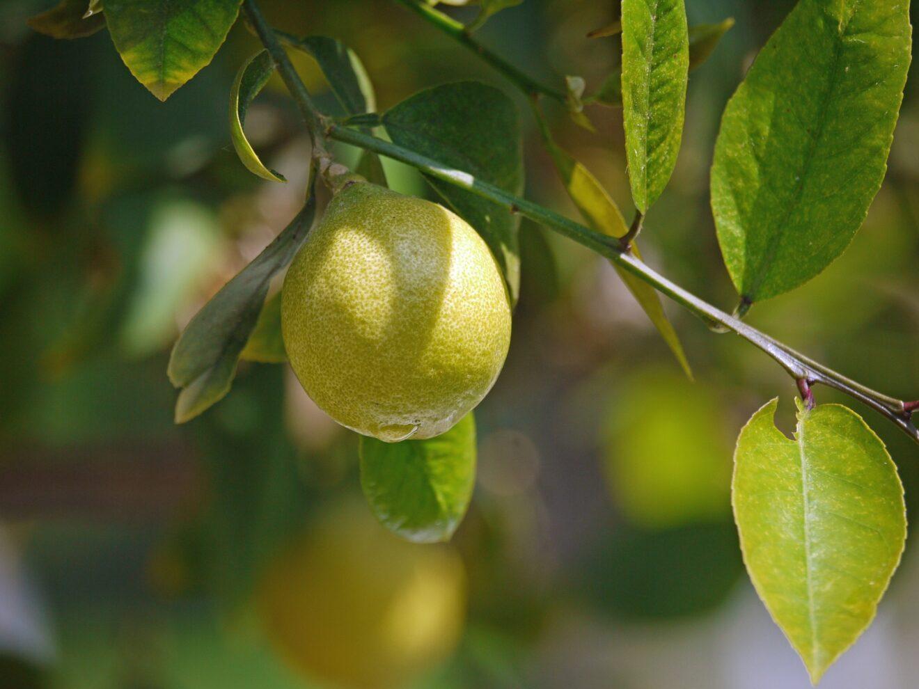 Le ferite, i limoni e la speranza